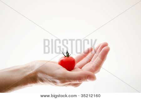 Cherry Tomatoe In Womans Hand