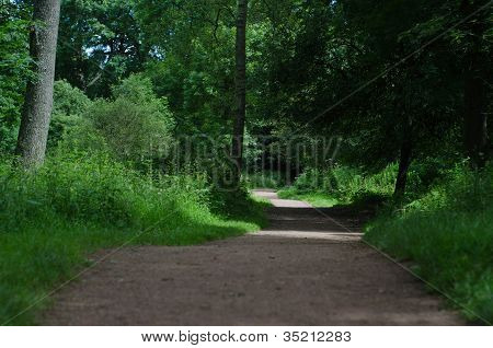 Pathway Through Woodland