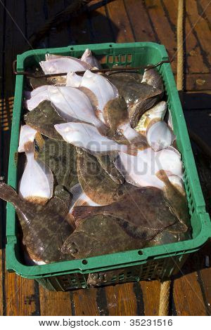Fresh flatfish in a box