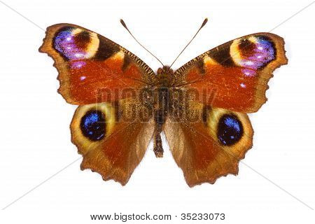 Peacock Butterfly Latin Name Inachis Io Isolated On White