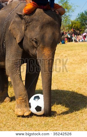 Elephant Playing Soccer Ball Grass Field
