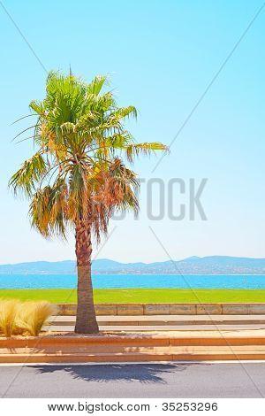 Saint Raphael Beach, Sea Bay And Palm. Azure Coast, Provence.