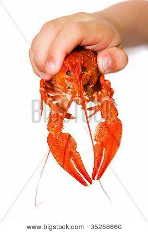 A Little Boy Holding A Crayfish