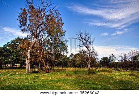 Country Farmland ,Western Australia