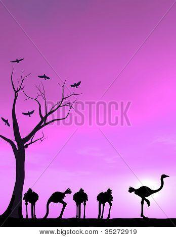Ostrich Courage