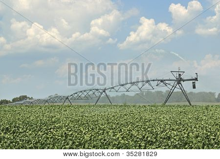Watering Soybeans