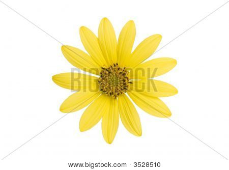 Yellow Flower On White