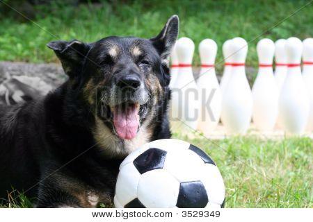 Sportsdog