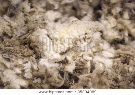 Lã merino