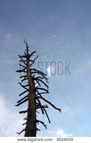 Single Tree Background