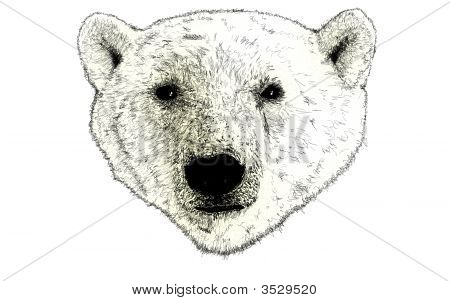 Head Of A Polar Bear Illustration On White