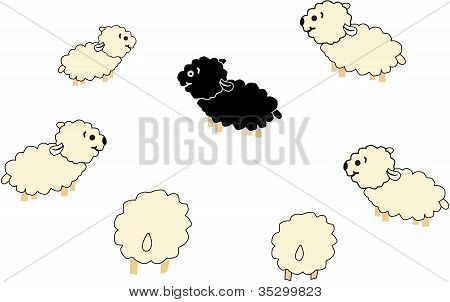 Black And White Sheep.