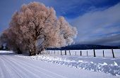stock photo of winter scene  - Winter morning featuring snow and hoar frost in central Idaho - JPG