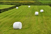 Rolled Silage Bales In The Meadow