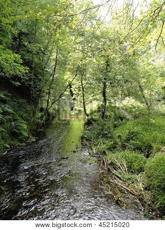 Rural River
