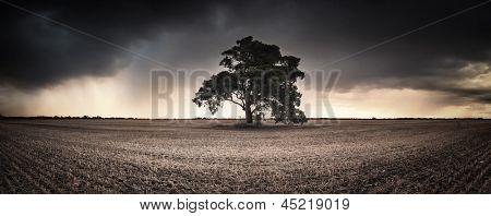 An Australian farmland panorama