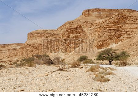 Acacia trees at the bottom of the desert valley under the striped mountains