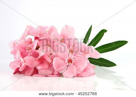 Bouquet Of Light Pink Flowers.