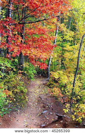 Autumn On Hungarian Falls Trail