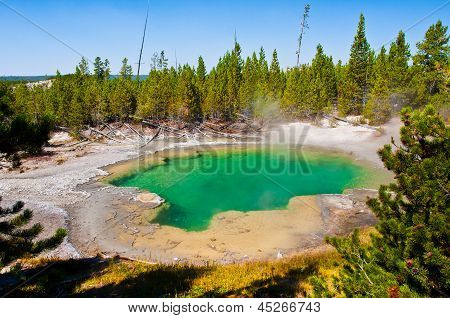 The Green Hot Spring Pool among Trees in Yellowstone National Park