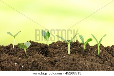 Green seedling growing from soil on bright background