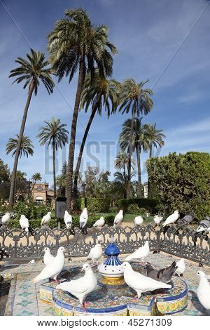 Pigeons In a Park. Seville, Spain