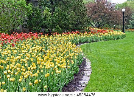 Winding Tulips