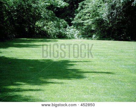 Big Open Field