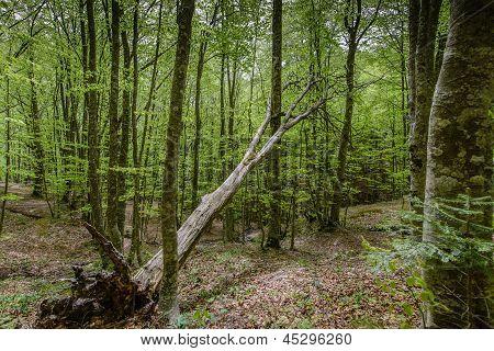 a tree after lightning