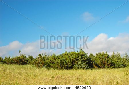 Long Beach Coastline Landscape
