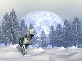 pic of wolf moon  - White wolf walking in the snowy mountain with fir trees by winter - JPG