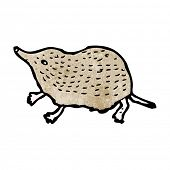 picture of shrew  - shrew illustration - JPG