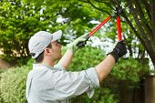 picture of cutting trees  - Professional gardener pruning a tree - JPG