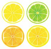 citrus fruit. Rasterized illustration. Vector version in my portfolio