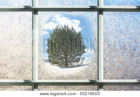 Frosted Winter Window Glass With Pine Tree Outside