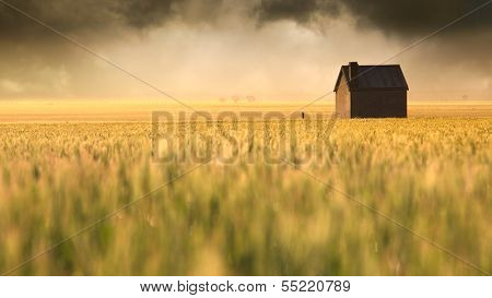 A beautiful sunrise over a rural field