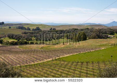 Napa Valley Fields