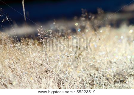 Wild Meadow On Winter Morning