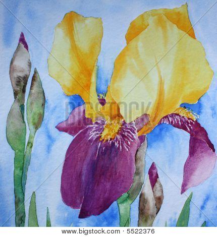 Iris Blossom
