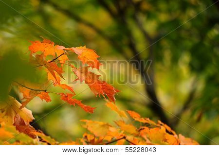Colorful autumn leafs against greenish background