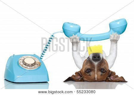 Dog Telephone