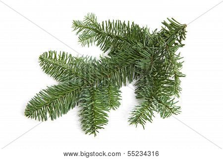 Bare Green Plucked Christmas Twig Over White Background