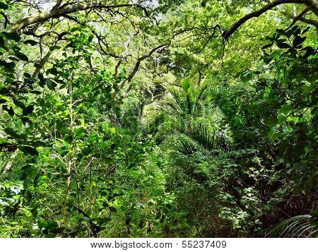 Native Bushland Vegetation