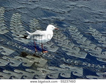 Red Billed Gull On A Water Fountain