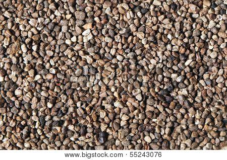 Black Cardamom (or Cardamon) Seeds