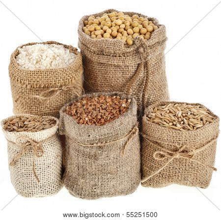 Corn kernel seed meal and grains in bags isolated on a white background