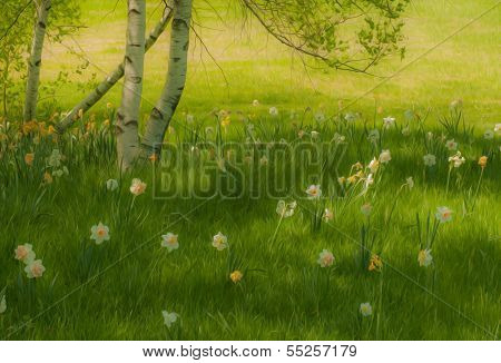 Birch Tree And Daffodils