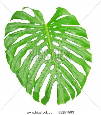 Tropical leaf close up with water