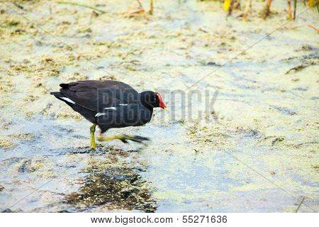 Vulture Red Neck Birds In Ballestas Islands Peru South America  National Park Paracas   Flora And Fa