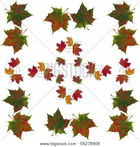 arrangement of multicolor autumn leaves of maple tree